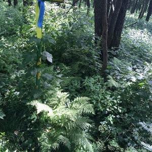 Залесье-3